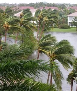Florida Flood & Hurricane Adjuster