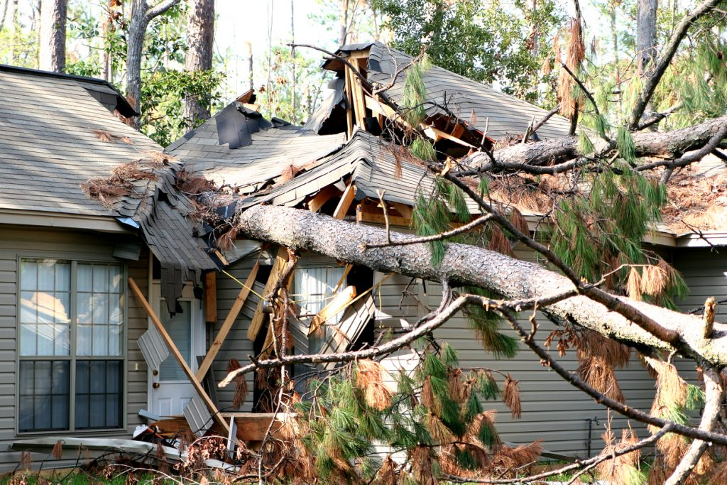 Trees that fell on a house during a hurricane