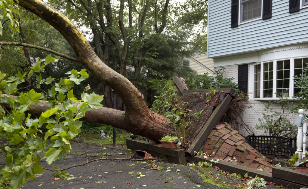 A fallen tree next to a house